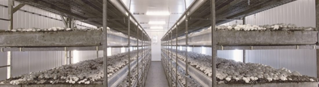 Beneficios del Biogás para el cultivo de setas