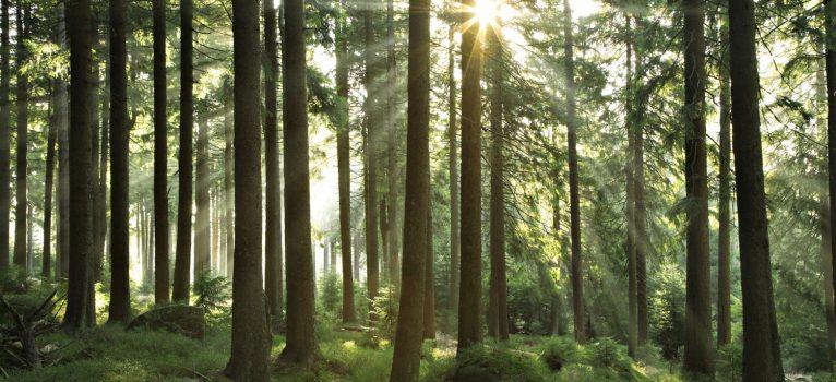 Bioenergía: una interesante alternativa en los cultivos de setas